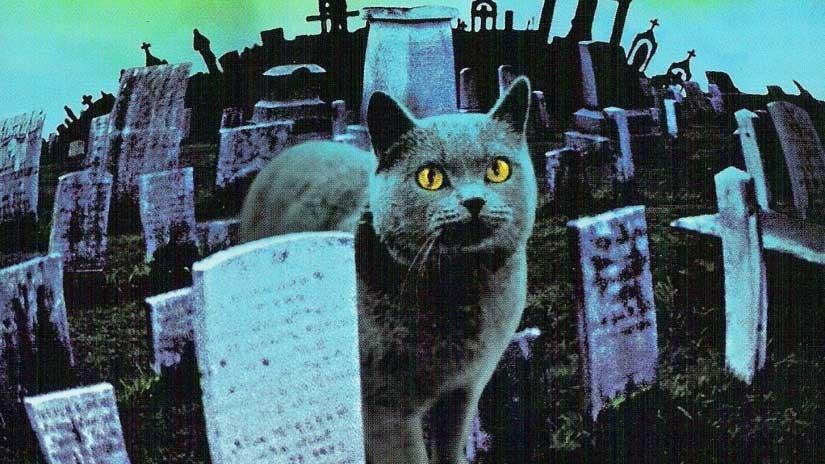 En katt på en kyrkogård.