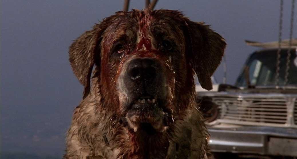 Rabiessmittade hunden Cujo i Stephen King filmen med samma namn.