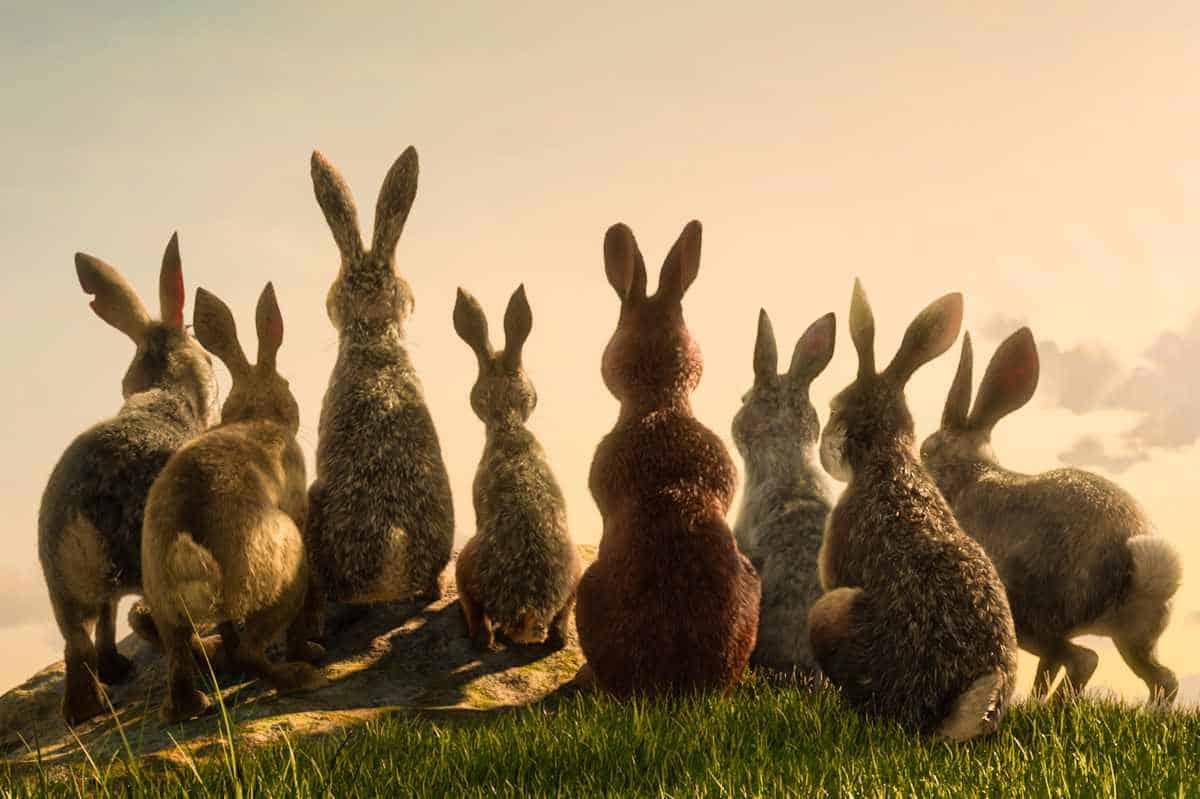 Kaniner sedda bakifrån i Den långa flykten.