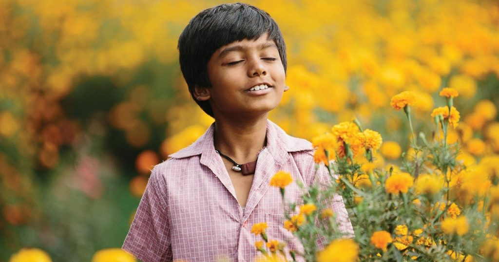 Pojke står på ett blomfält.