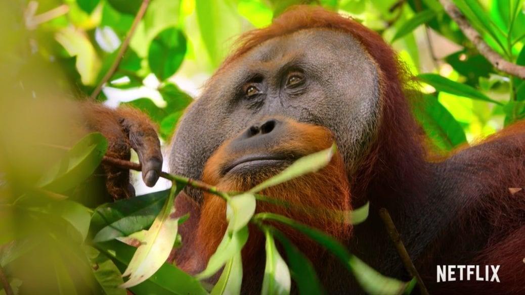 "David Attenboroughs ""Our Planet""."