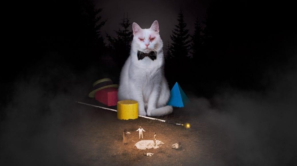 Den vita katten i Koko-di Koko-da.