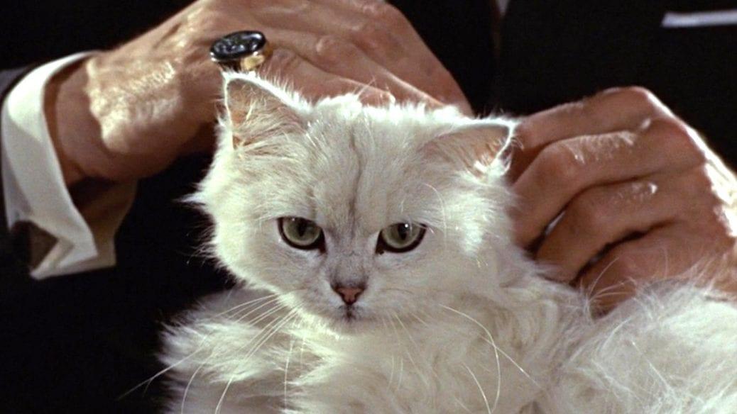 Blofelds katt.