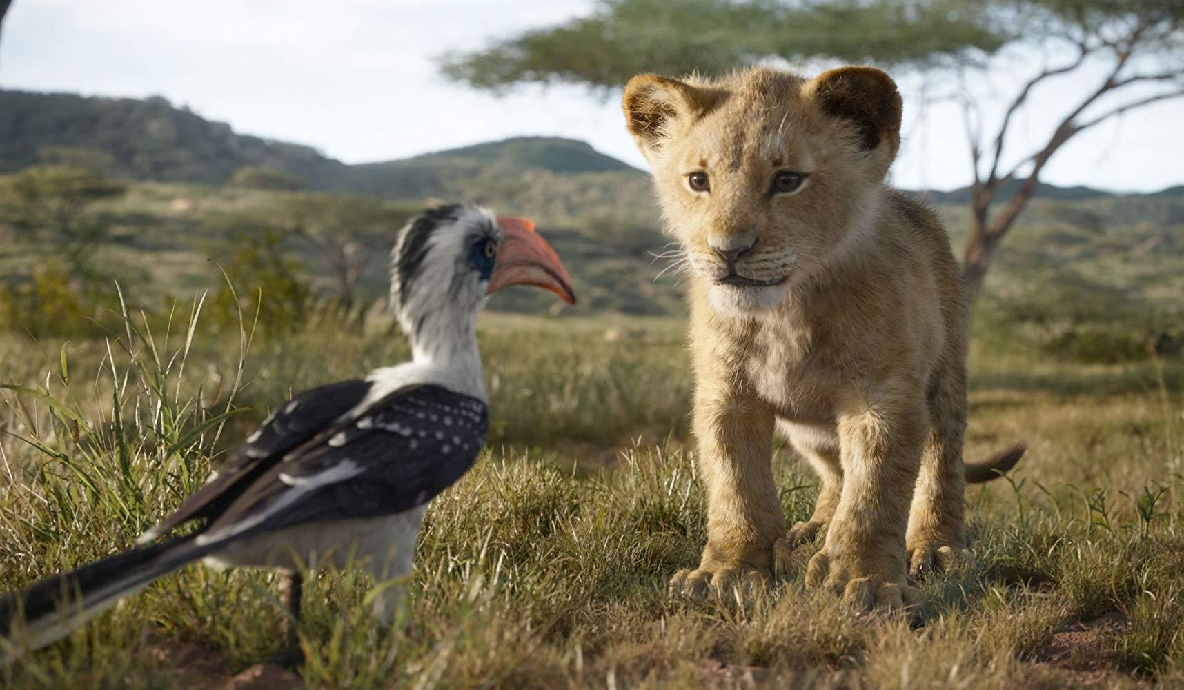 Simba och Zazu i ett möte som är nästan identiskt med originalfilmen. Foto: Walt Disney Studios Motion Pictures.