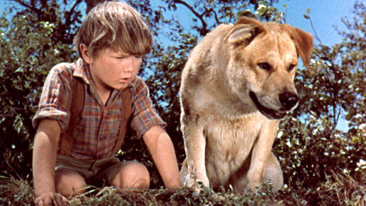 Pojken och hans hund, bästa vänner i filmen Old Yeller