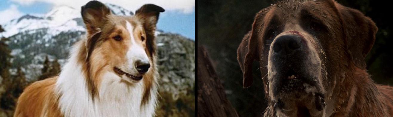 Hundarna Lassie och Cujo