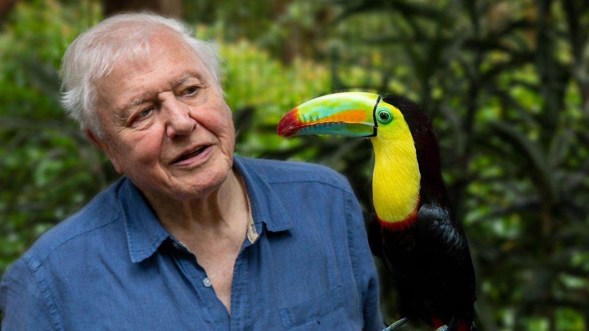 Bland de bästa serierna 2021 hittar vi Life in Color with David Attenborough på Netflix.