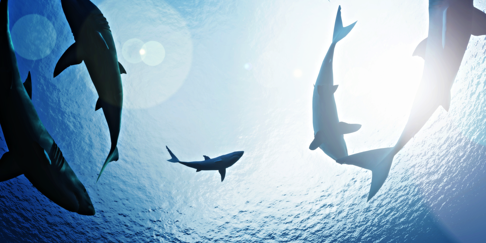 Playing with Sharks kommer till Disney+